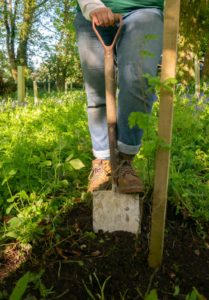 A person in jeans and boots, planting a sapling tree in a woodland.